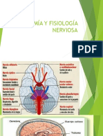 Anatomía y Fisiología Nerviosa