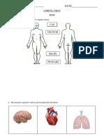 Corpul_uman Organe Interne Si de Simt