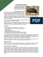 EL CHANCHITO DE TIERRA.docx