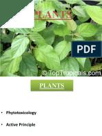16.Plants