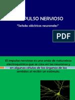 Impulso nervioso 3°B