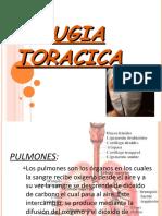 Breve Resumen Sobre Cirugía Torácica