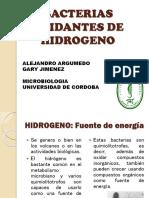 Bacterias Oxidantes de Hidrogeno