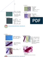 Gambar Sedimen Urin.pdf