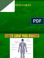 Sistem Saraf Pada Manusia1 (1)