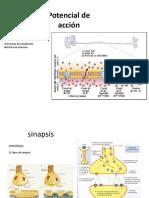 Sistema Nervioso Histología