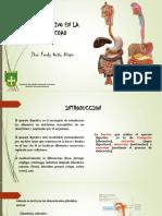 sistemadigestivoenlaterceraedad-131202074347-phpapp02