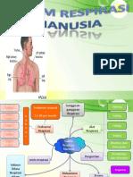Sistem Penafasan