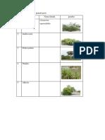 Tabel 2 Vegetasi Pada Gumuk Pasir