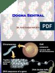 Dogma Sentral 09