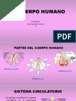 EL CUERPO HUMANO 2.pptx