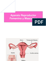ppt reproductor