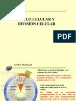 CLASE 3. CICLO CELULAR Y DIVISIÓN CELULAR.ppt (1).pps