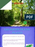 LAS PLANTAS.pptx