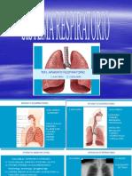 19824755-respiratorio.ppt
