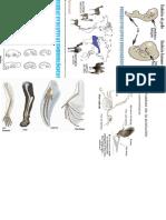pruebas evolutivas.docx