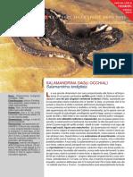 Visti da vicino - Salamandrina dagli occhiali.pdf