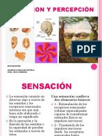 Sensacion y Percepción Diapositivas