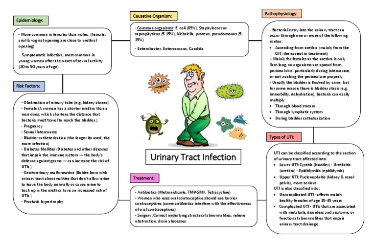 UTI - concept map | Urinary Tract Infection | Public Health