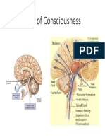Physiology of Consciousness