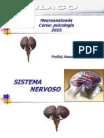Neuroanatomia Psicologia 2017