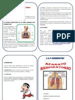 Aparato-Respiratoriodiptico