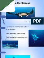 La Mantarraya.pptx