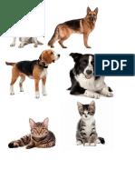 p-activ-de-clasificacion-mascotas.docx