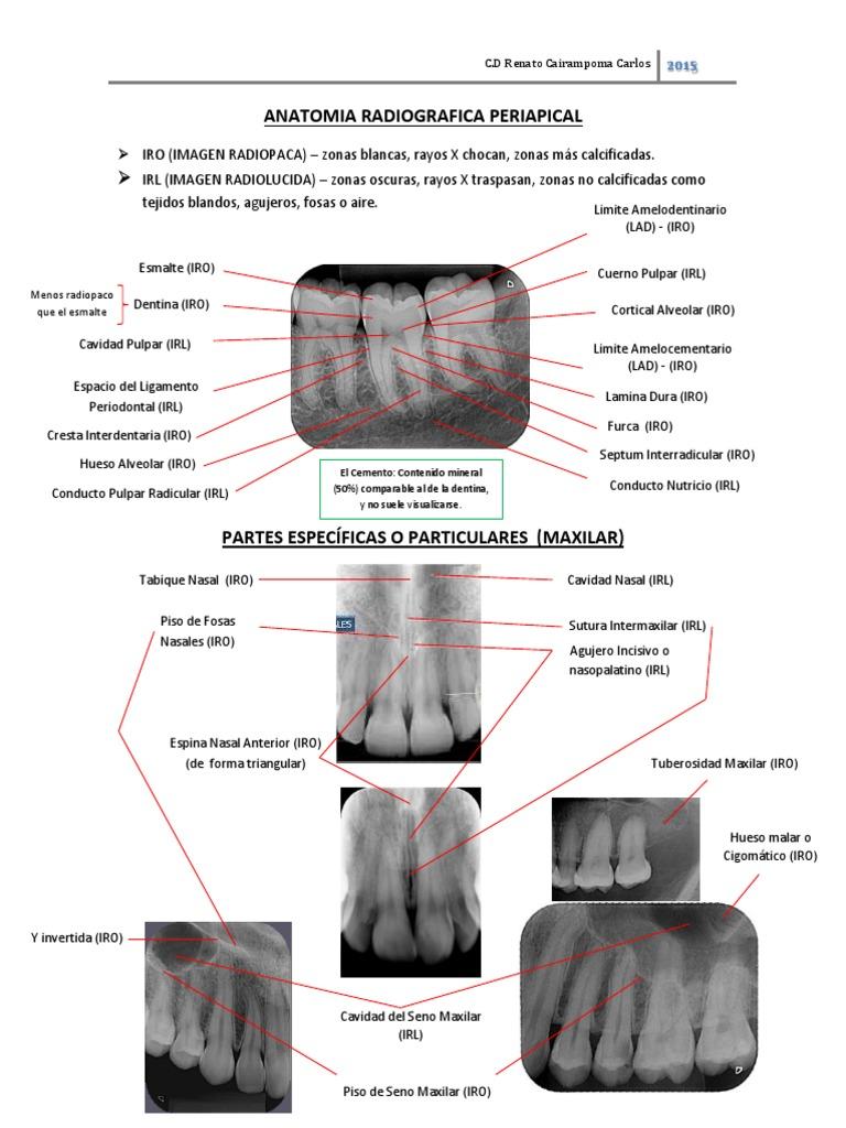 Anatomia Radiografica Periapical _ Renato c.