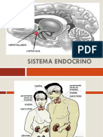 Sistema Endocrino Pato