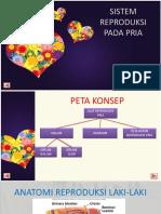 sistem_reproduksi_pria1.pdf