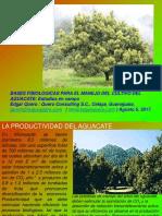 Bases Fisiologicas Para El Manejo Del Aguacate Dr Edgar Quero