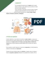Sistema Respiratorio, Enfermedades y Cuidados