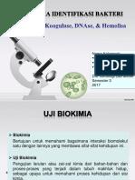 Uji Katalase, Koagulase, DNAse, & Hemolisa (1)