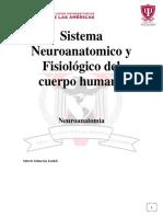 Sistema Neuroanatomico y Fisiológico Del Cuerpo Humano