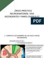 Neuroanatomía 3