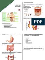 El Aparato Digestivo - 2 Copias