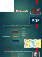 Genero Bartonella