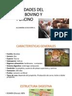 Clase 1. Generalidad Del Ganado Bovino y Porcino
