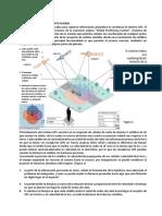 MANUAL_CORRECCION_ED_CTA_5TO_SEC.pdf