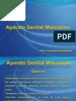 Clase de Genital Masculino Prof. Francisco Mosqueda