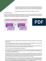 MARCO TEORICO Y DISCUCIONES INFORME 2 LAB MICROBIOLOGIA.docx