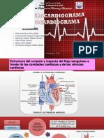 Electrocardiograma y Ecocardiograma, Fundamentos Teóricos