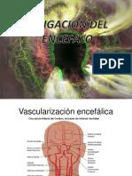 vascularizacion encefalica