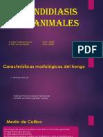 Candidiasis en Animales