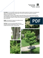 Japanese Tree Lilac, Syringa Reticulata - Delaware Center for Horticulture