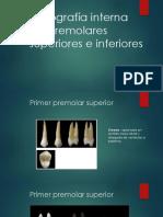 topografia interna premolares