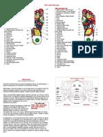 Harta zonelor reflexogene.doc