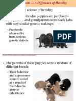 Anatomy Unit 4 - Genetics and Heredity