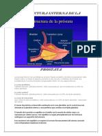 Estructura Interna de La Próstata